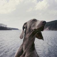 ¿Le hablas a tu perro? No sirve de mucho: prefieren el contacto físico a las palabras
