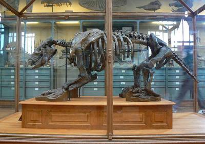 Perezosos gigantes en el Museo Aragonés de Paleontología
