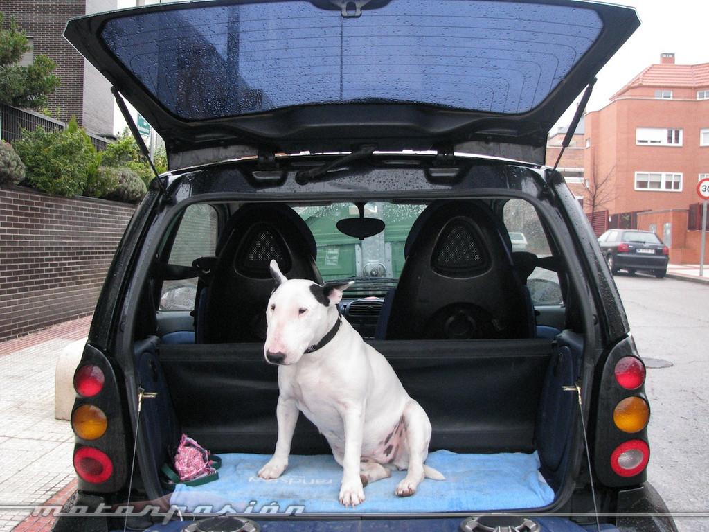 Foto de Transporta correctamente a tu mascota (3/11)