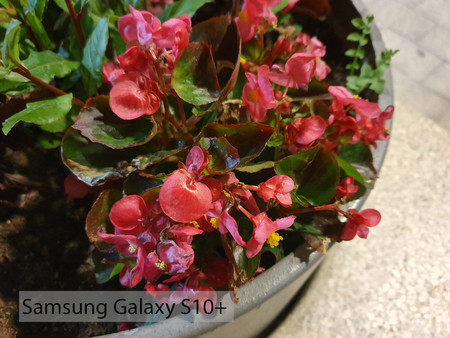 Samsung Galaxy S10plus Macro Noche