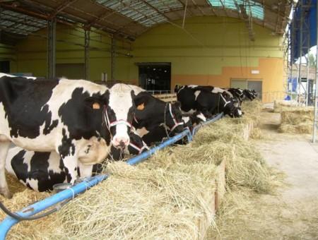 La Crisis de la leche contada en cinco minutos (aunque te va a quedar claro en menos)
