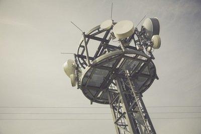 Selección natural en las antenas