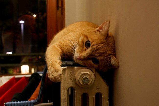 Un gato sobre un radiador