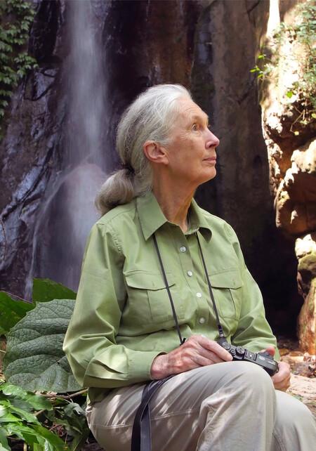 Maisons Du Monde 0e134ccb Ef2a 47f1 B1ca 548b0de71c30 Jane Goodall Portrait