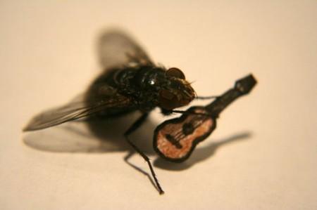 ¿Cuántas moscas serían necesarias para tirar de un coche? 200 millones