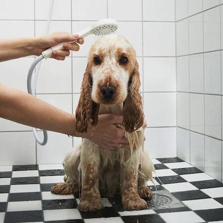 Un Perro Marron Al Que Estan Duc
