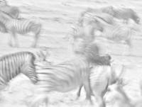 'En ocasiones componemos de memoria': Uge Fuertes Sanz, premiado en los Wildlife Photographer of the Year 2013