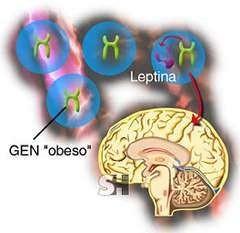 Alimentos con leptina para erradicar la obesidad