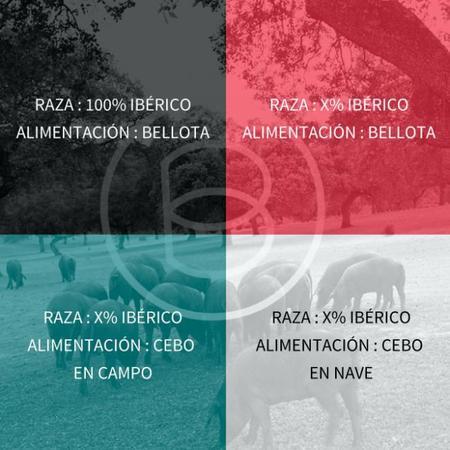Norma Para Ibericos