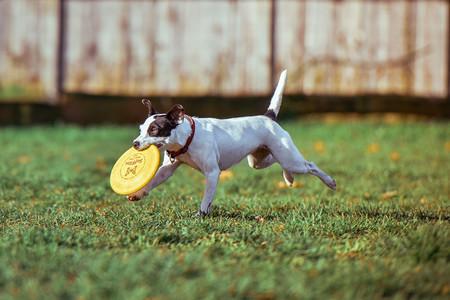 Como Fotografiar Mascotas I Perros 10
