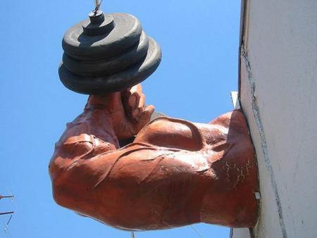 musculo-3.jpg