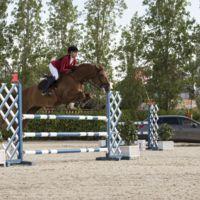Video: Inusual competencia entre un  caballo y un León…de SEAT