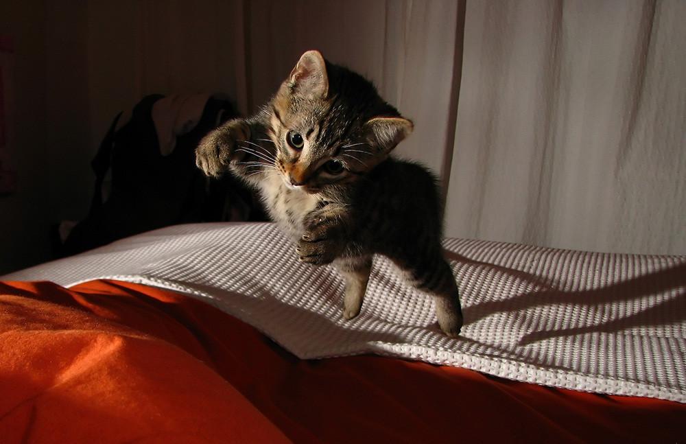 Como Fotografiar Mascotas I Gatos 9