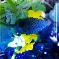 La unión de fitomejoramiento e inteligencia artificial ayuda a desarrollar alternativas a los cultivos transgénicos