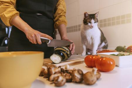 Cocina Gato