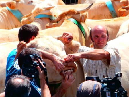 Tributo De Las Tres Vacas 7523764