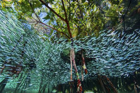 Silversides Cuba Reef