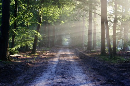 Road Sun Rays Path