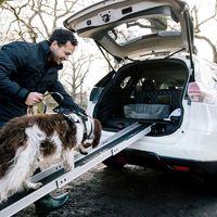 Nissan X-Trail 4Dogs, el crossover donde tus mascotas adorarán pasear