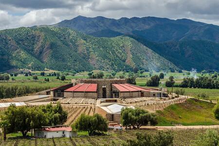 Historia del Vino tinto en México y que beneficios tiene para la salud un consumo moderado