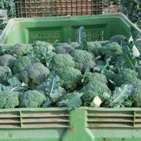 KeepCool, un invento murciano para conservar mejor frutas y verduras en largas distancias