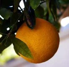 La industria agroalimentaria no quiere dejar de abrazar los productos fitosanitarios