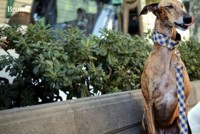 Los perros más hipster se preocupan por su imagen y confían en Brott modern dog