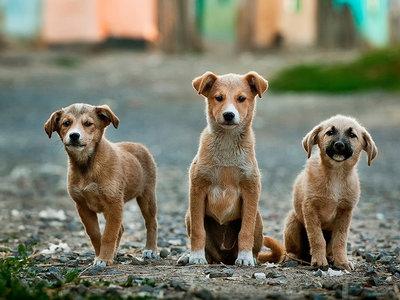 Cómo fotografiar mascotas (y II): Trucos para lograr mejores fotos de perros