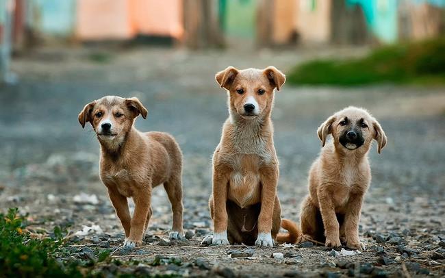 Como Fotografiar Mascotas I Perros 1