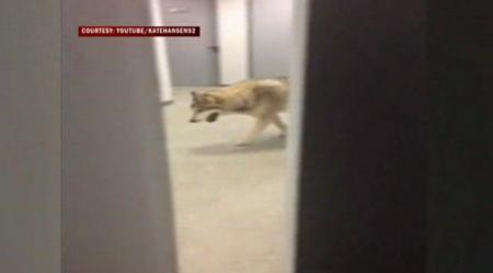Os Wolf Sochi Hotel 20140220