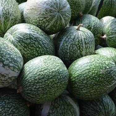 Chilacayote: una verdura 100% de México con múltiples beneficios para tu salud cómo ayudarte a bajar tus niveles de azúcar