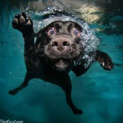 Foto 6 de 7 de la galería sorprendentes-fotografias-caninas-bajo-el-agua en Xataka Foto
