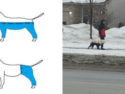 Tras años de agrio debate, Internet ha resuelto por fin cómo debe llevar los pantalones un perro