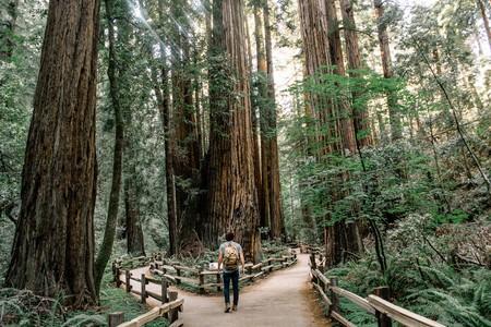 paseo-bosque-vacaciones