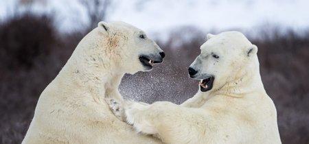 13 streamings para decir adiós a la BBC y montarte tus propios documentales de animales
