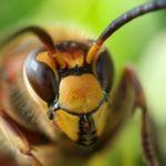 Así es Hornet, el candidato a suceder a TOR que nos promete mayor velocidad y privacidad