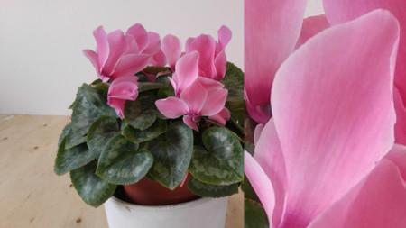 Lg V10 Flor