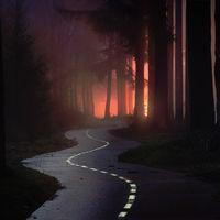 La misteriosa belleza de los bosques holandeses retratados por Albert Dros