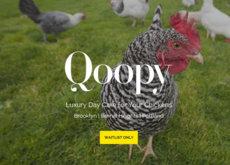 El mundo de hoy mola tanto que no sabemos si una guardería de gallinas es real