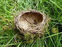 ¿Pones la casa patas arriba? Es el síndrome del nido
