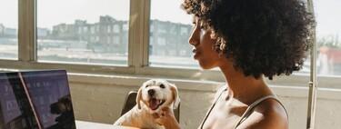 Cuatro ventajas de llevar al perro al trabajo que convencerán al jefe de montar una oficina pet-friendly