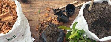5 plantas medicinales que debes tener en tu cocina