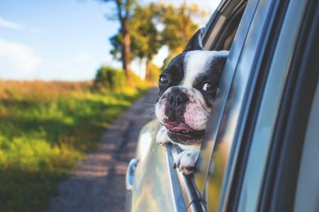 perro-ventanilla-coche