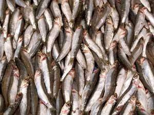 La anchoa está en crisis