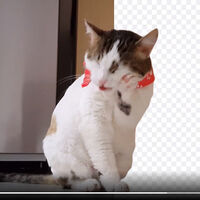 En este sitio puedes eliminar el fondo de un vídeo o GIF animado de forma automática y gratis