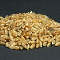 Más allá de la quinoa: el freekeh es el nuevo superalimento