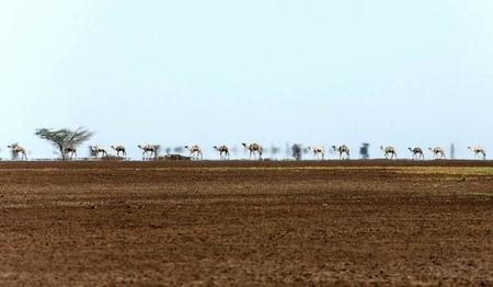 00kn01-im1001-chalbi-desert-1475.jpg