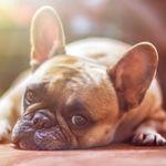 Los perros pueden llegar a sentir una empatía similar a la de los humanos