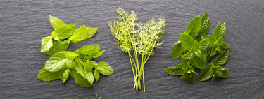 Las nueve hierbas aromáticas que no pueden faltar en tu despensa