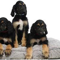 Ésta es la primera clonación repetida de un perro ya clonado